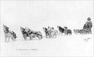 A dog team howls along the Iditarod Trail.
